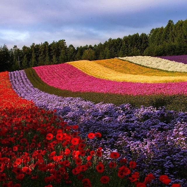 Spring in Furano, Hokkaido - Japan | Photo by Zhong Jin