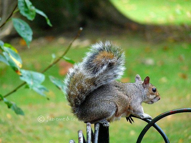 WALK & RELAX - Aller taquiner les écureuils à St James's Park
