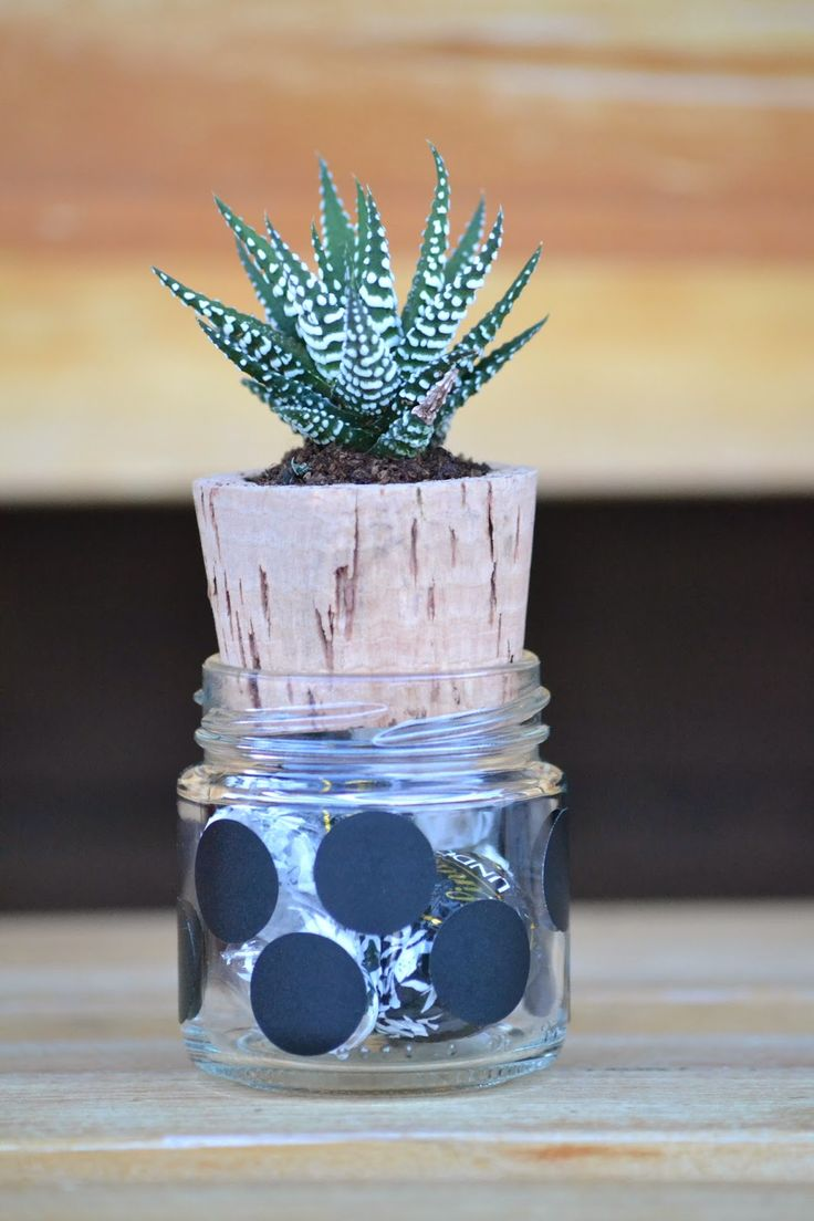 Vasetto di vetro con dolci e tappo di sughero che funge da vaso per la pianta grassa.  Little jar filled with candies, and cork turned into a tiny pot for succulents
