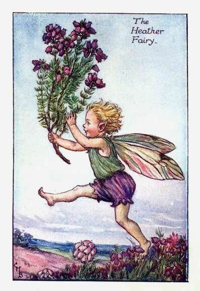 The Heather Fairy ~ Cicely Mary Barker