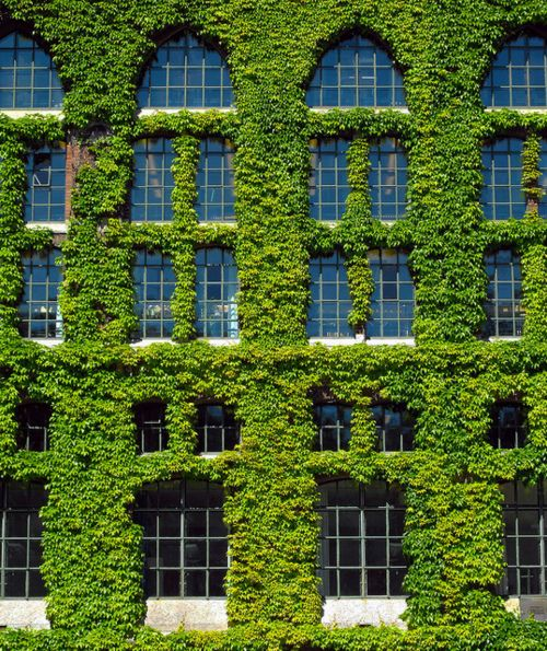 Ivy league: Green Home, Green Building, Green Gables, Window, Age Architecture, Beautiful Places, Gardens House, Green House, Gardens Plants