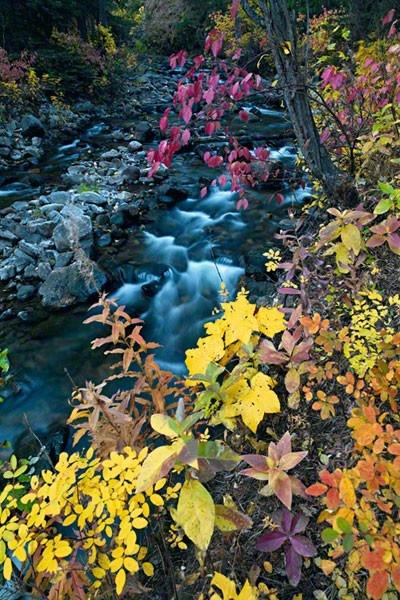 Peter Lik: Lik Photography, Mornings Colorado, Forests Flowers, Mornings Www Lik Com, Autumn Mornings, Colorado Limited, Forests Mornings, Fine Art Photography, Colorado Peter