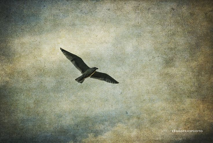 A Seagull sailing in the sky.
