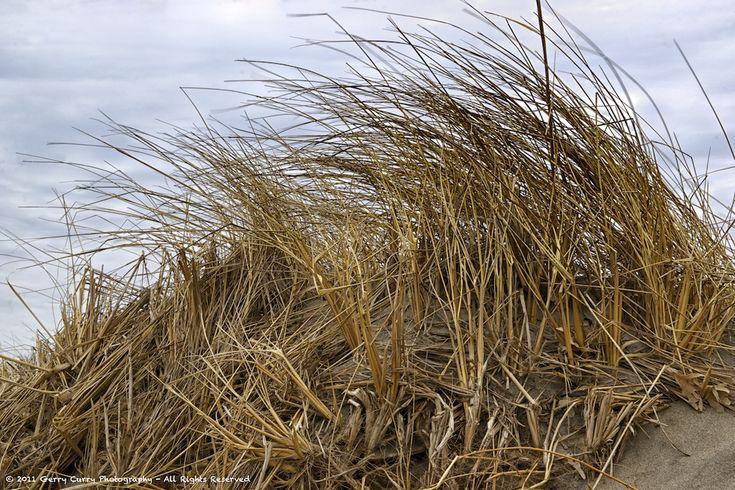 Sea Grass - Port Maitland Beach
