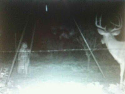 The people who took this photo didn't see the apparition until the photo was developed - but, they knew something was spooking the deer!