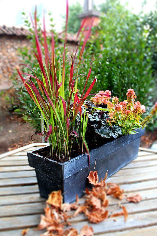 www.fleursaubalcon.com Abonnement de jardinière fleurie pour balcon Red Baron, skimmia et heuchère