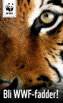 Tigeren er en av verdens mest truede dyrearter. WWF arbeider for tigeren bl.a. ved å opprette verneområder.        Vi har bare 3.200 tigre igjen. Bli fadder!