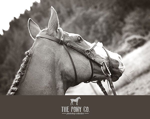 Photoshop Actions for Horse Photographers. See SOOC, Color and Black and White versions.