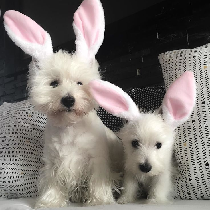 #happyeaster everyone! by emma_the_westie
