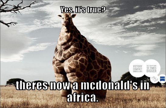 Pinterest Hilarious: Funny Animal Meme.
