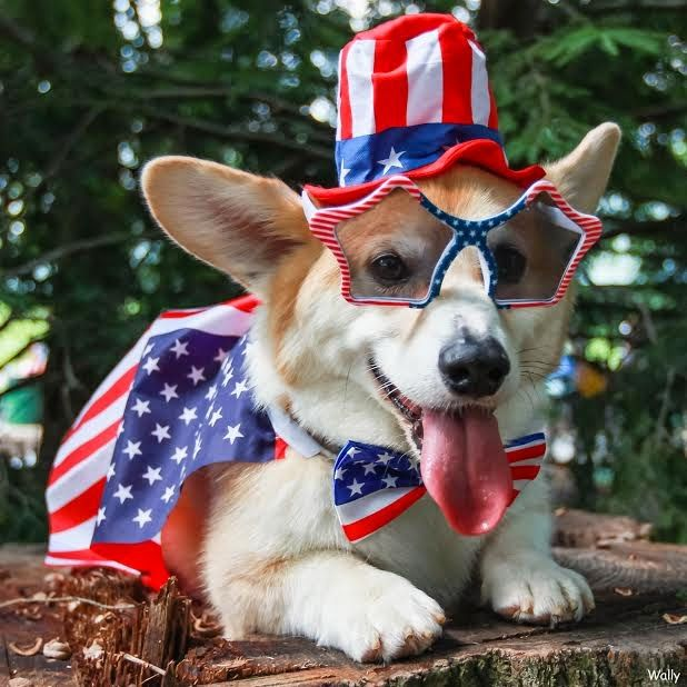 fourth of july dog outfit
