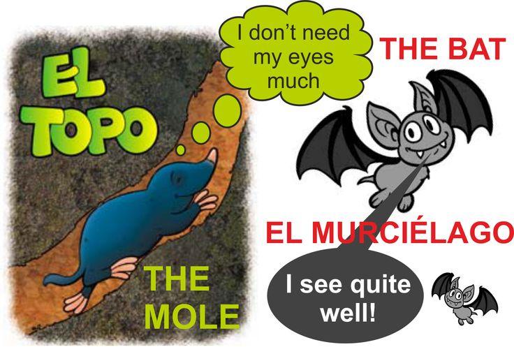 """En español, para referirnos a una persona que no ve demasiado bien, utilizamos a menudo la expresión """"CIEGO COMO UN TOPO"""", la cual no es muy correcta ya que los topos no son del todo ciegos: tienen una visión muy reducida ya que viven debajo de la tierra, y sus características físicas se han adaptado a su entorno... pero ven.  En inglés, para lo mismo, usamos la expresión """"BLIND AS A BAT"""", que tampoco es cierta ya que los murciélagos no son ciegos!"""