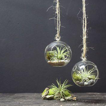 Mini Hanging Air Plant Terrarium, Set of 2