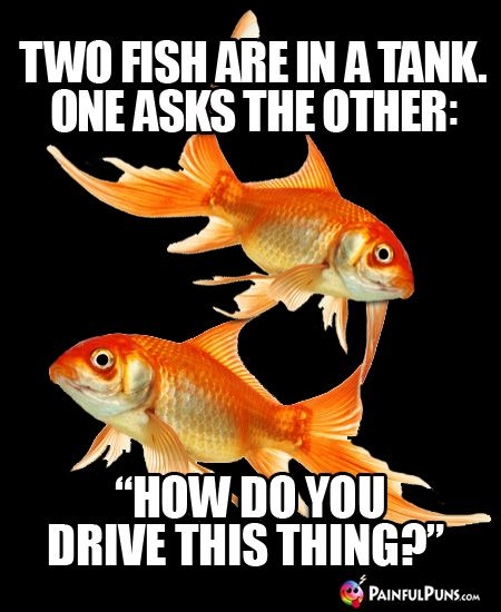 39 best painful puns ouch images on pinterest funny for How do you clean a fish tank