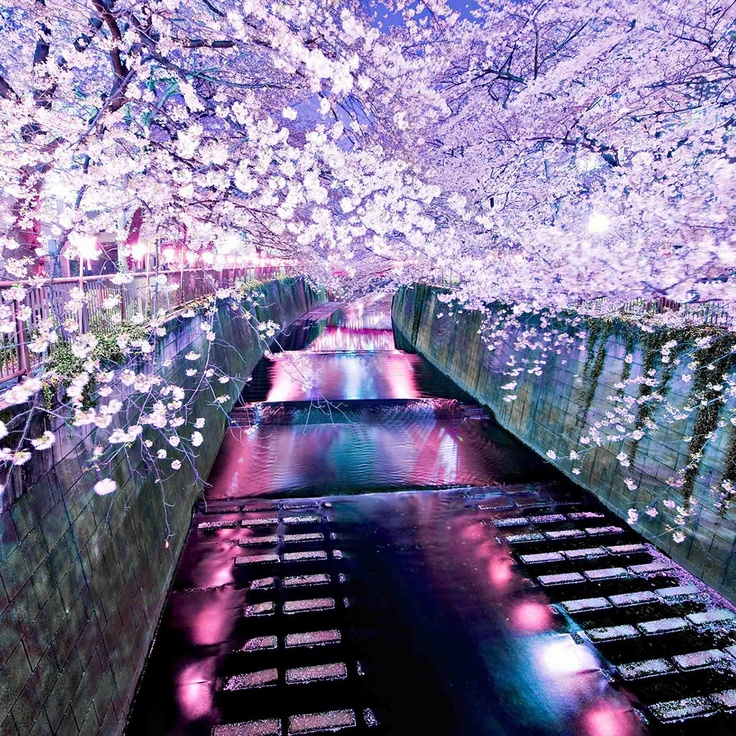 天上界の春桜
