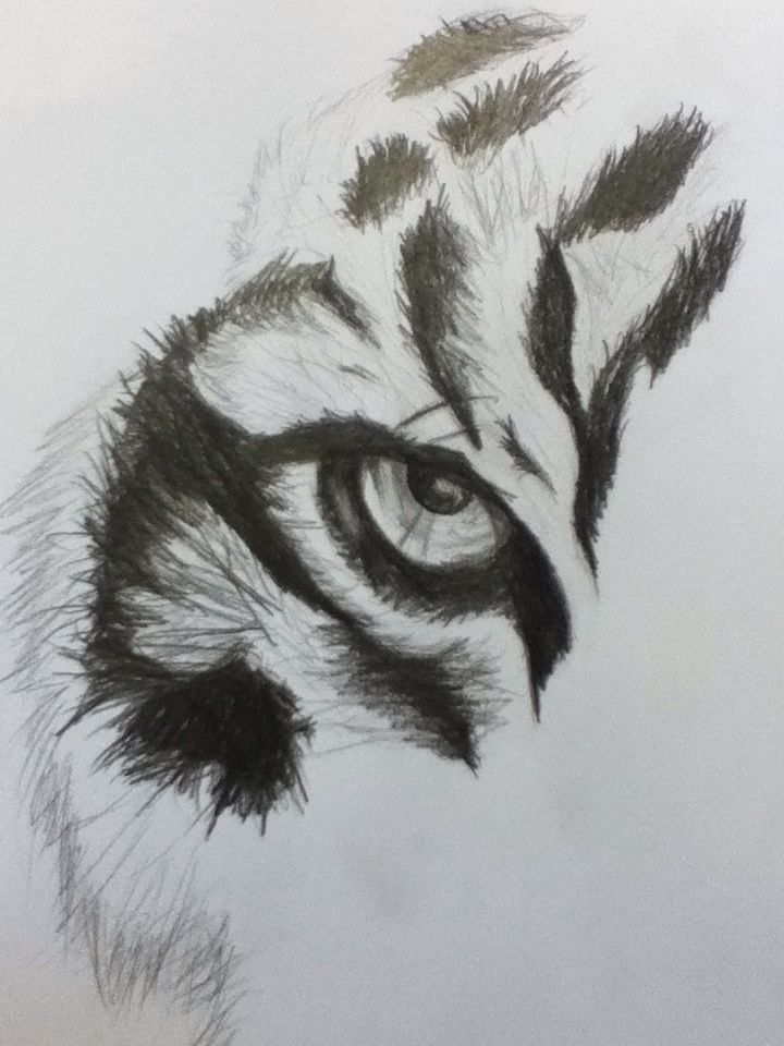 Tiger Eye  (Drawn from picture)