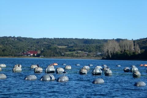 Mussel farming in Chiloe
