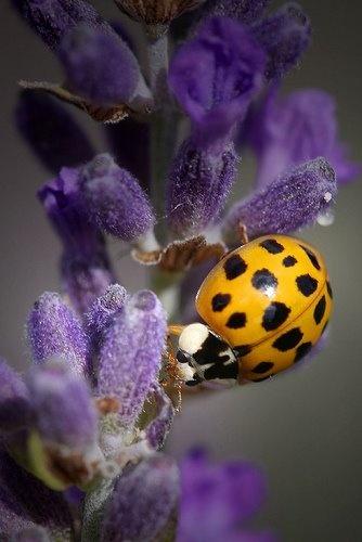 45 best arbustos con flores images on pinterest shrubs - Arbusto pequeno con flores ...