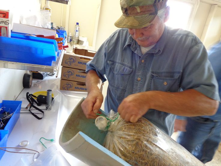 cold pasteurization of substrate - Low Cost / Low Tech Methods to Grow Mushroom - Aloha Medicinals Mushroom Culture Bank