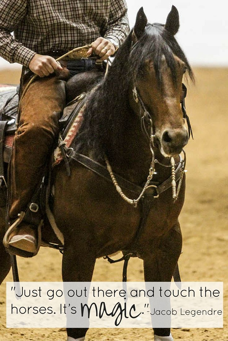 Pics photos quote i wrote for my horse com account s equestrian - Horse Quote For Equestrians Just Go Out There And Touch The Horses It S