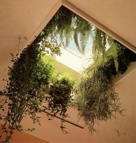 """Wow sky light. Inspiration for an """"herb window"""" in the kitchen"""