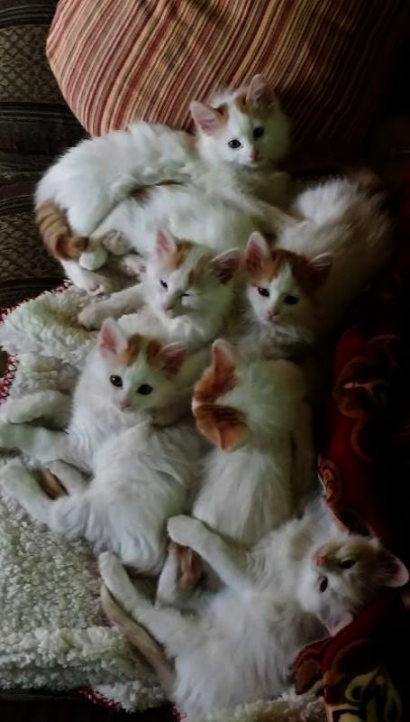 Check it out Kittens For Sale Near Me Cheap Cute cats