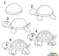Schildkröte                                                                                                                                                                                 Mehr