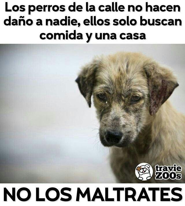 Perros Callejeros Perros Perros Tristes Animales Frases