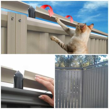 oscillot sistema gatos