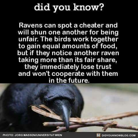 Ravens are the bomb!