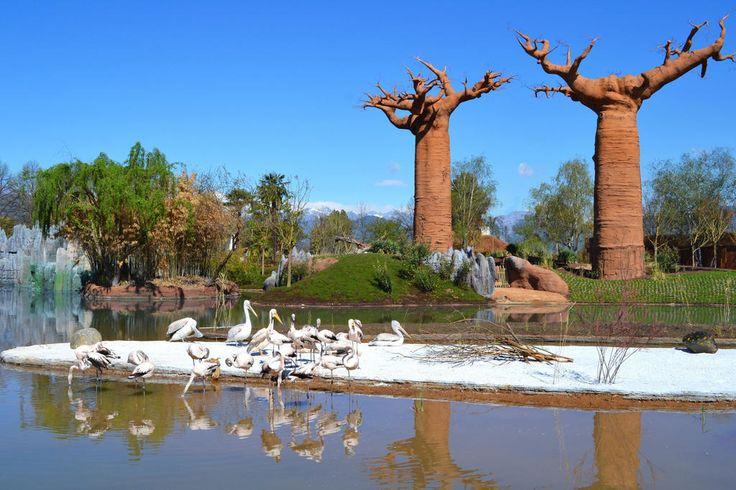 Zoom Torino #ilmiopiemontepreferito le Alpi, le Langhe e scorci d'#Asia e #Africa inattesi...dalle parti di Cumiana:) #bioparco #to