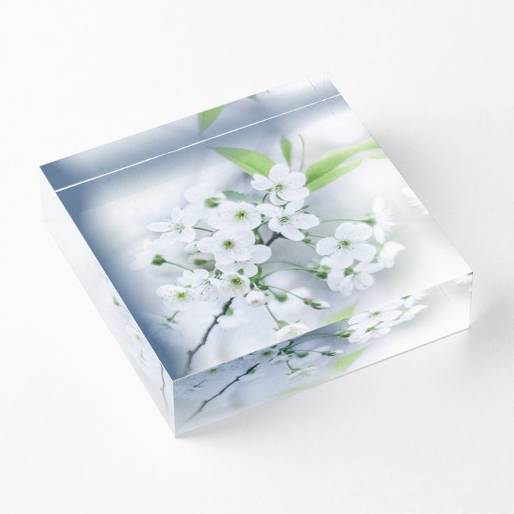 photo, photography, artwork, buy, sale, gift ideas, redbubble, cherry, cherry blossoms, freshness, green leaves, spring flowers, spring trees, tenderness, white flowers, white petals, young, springtime, spring, home decor, comfort, acrylic block
