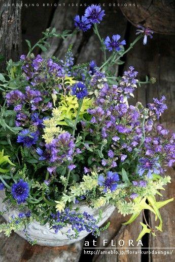 フローラのガーデニング・園芸作業日記-セントーレア・ベロニカ・カエノリナムの寄せ植え