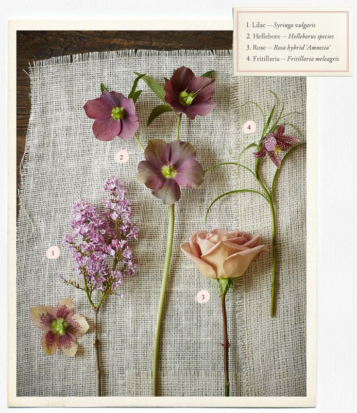 Wedding flower guide: lilac, hellebore, and rose. Deep blush hued blooms for your wedding bouquet