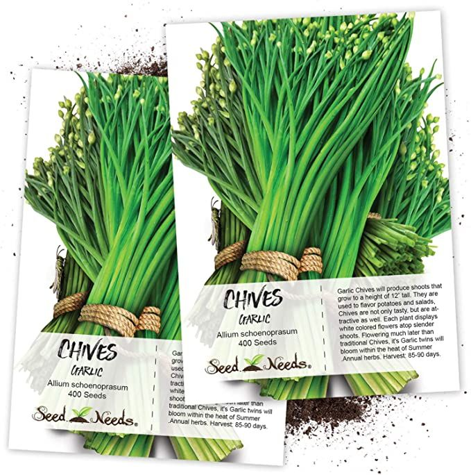 Amazon Com Seed Needs Garlic Chives Herb Allium Tuberosum Twin Pack Of 400 Seeds Each Non Gmo Vegetable Plants Chives Herb When To Plant Garlic Herbs