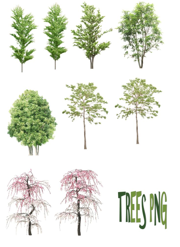Trees png by
