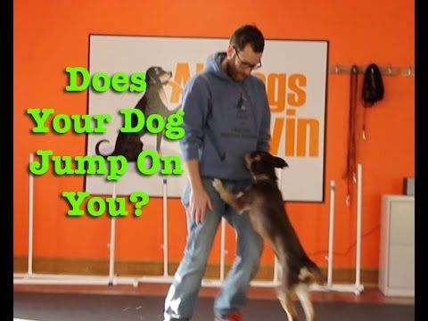 how to get my dog to stop jumping on people