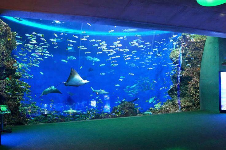 水槽の前で幻想的な一夜を過ごす大人気のナイトステイ #鴨川シーワールド #水族館 #アクアリウム #期間限定イベント #千葉県