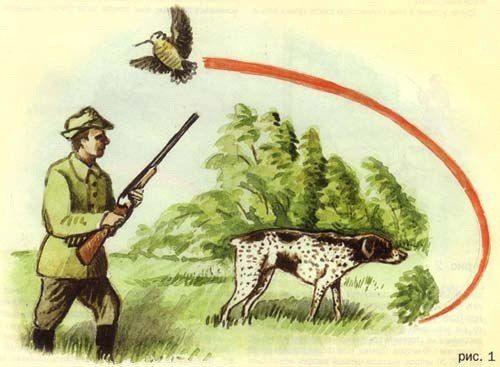Осенний вальдшнеп без собаки.    Осенняя охота на вальдшнепиных высыпках с легавой собакой очень интересна, но для этого надо угадать подходящее время и найти нужное место. Однако владельцами подружейных собак являются немногие, поэтому встречи с осенним вальдшнепом у большинства охотников бывают редкими и, в основном, случайными.    ОХОТА НА ВЫСЫПКАХ    В конце сентября – начале октября вальдшнепы обычно днюют ближе к опушкам, выходящим к скошенным лугам или полям, в особенности, если на…
