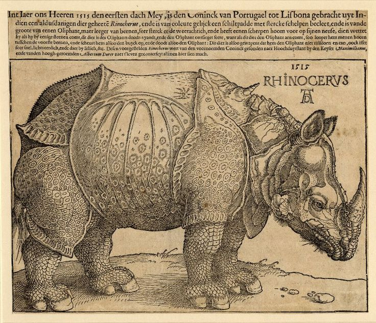 Albrecht Dürer : Rhinocerus (Rhinoceros) woodcut