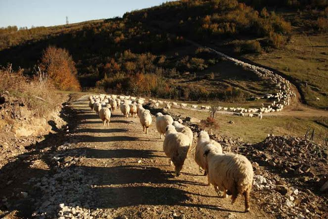 "dragos lumpan on Twitter: ""7 days left to help Last Transhumance, a documentary…"