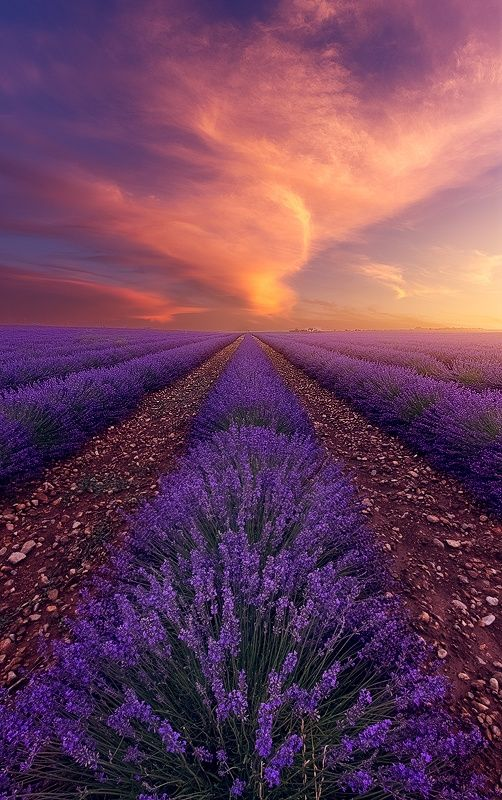 ~~Sensual Fire   sunset falls upon a lavender field, Provence, France by Alexandre Ehrhard~~