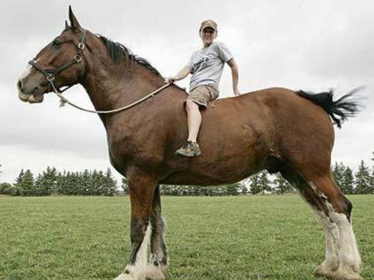 Pin on The Beauty of Horses The Drafts