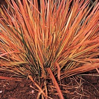 Ornamental Grasses Zone 7 49 best ornamental grasses for zone 4 images on pinterest northern lights ornamental grass zones 4 9 30 degrees f workwithnaturefo