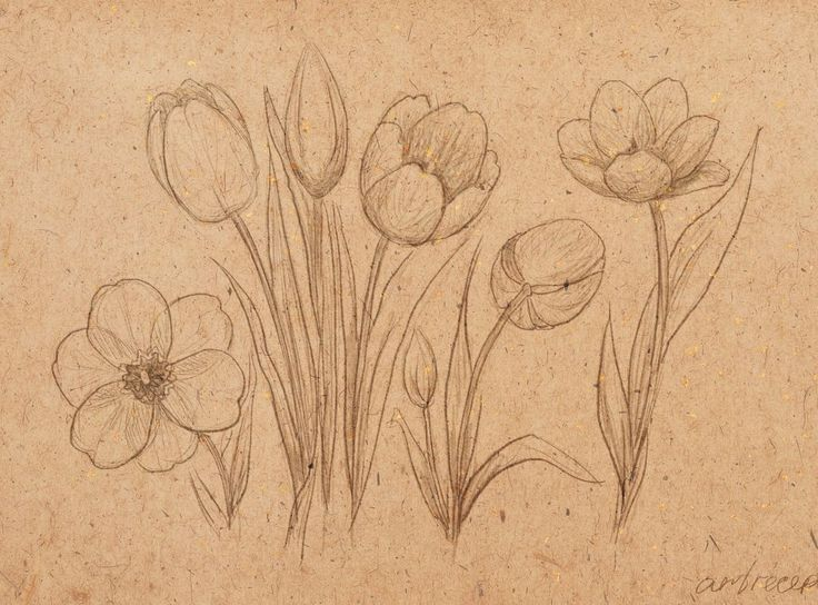 Sketch of bloming tulips