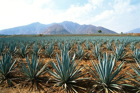 Tequila Trail, Mexico