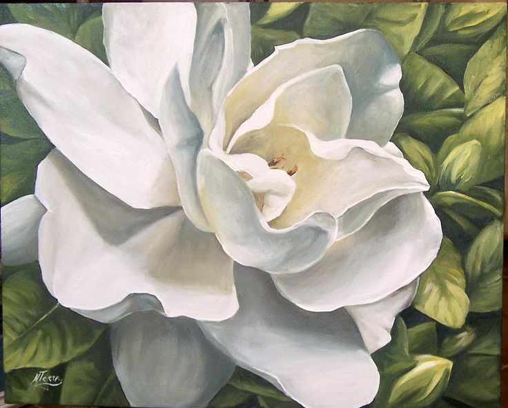 Charming Gardenia By Natalia Tejera