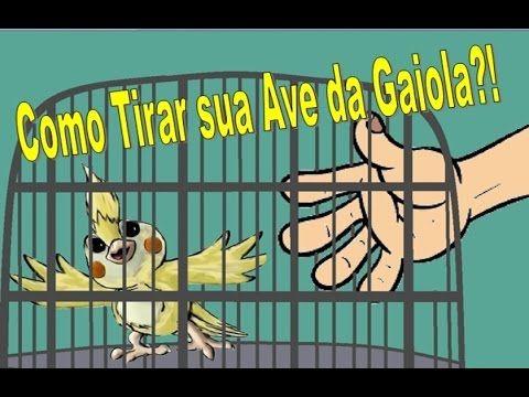 Como Tirar sua Calopsita da Gaiola!? + Dicas de amansamento - YouTube