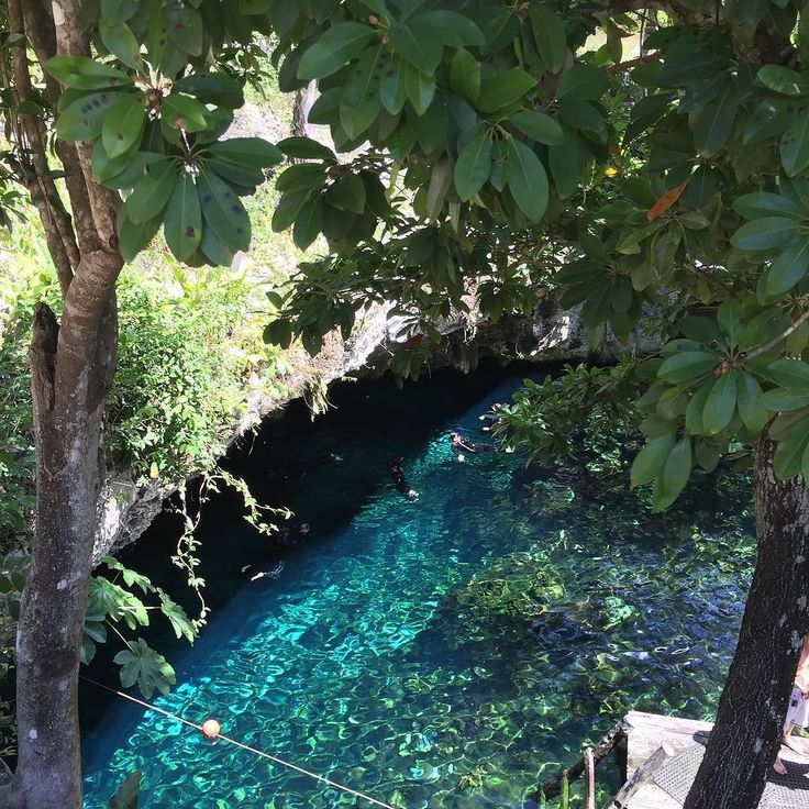 There are swimming pools and then there are cenotes. Wow.  #blue #water #travel #swim #Mexico