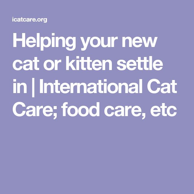 Helping your new cat or kitten settle in | International Cat Care; food care, etc